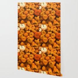 Pumpkins Tiny Gourds Pile Wallpaper