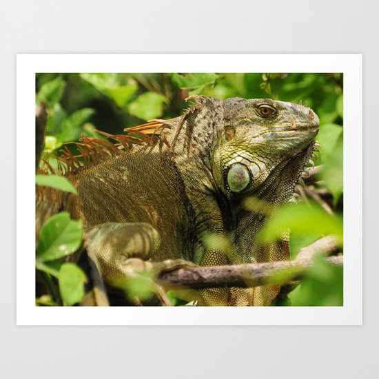 Costa Rican Iguana Art Print