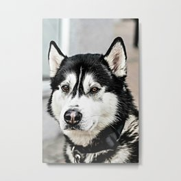 Husky Oil Metal Print