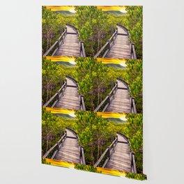 Mangrove Forest Sunset Wallpaper