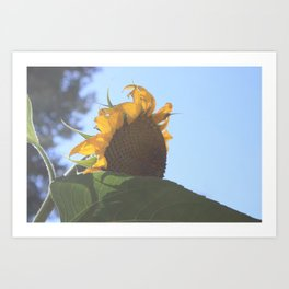 Spirited Sunflower Art Print