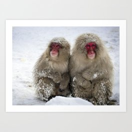 two snow monkeys Art Print