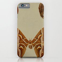 Vintage Print - Birds and Nature (1903) - Cynthia Silkworm & Silk Moths iPhone Case