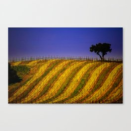 Vineyard in Northern California Canvas Print