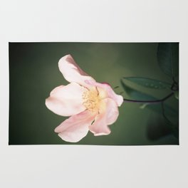 October flower Rug
