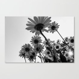 Below The Daisies Canvas Print