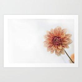 Dahlia Flower Art Print