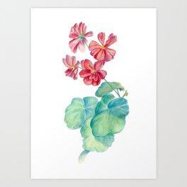 Red watercolor geranium Art Print
