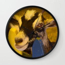 Hi there...Pet me Wall Clock