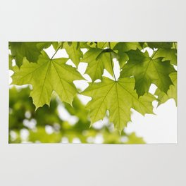 The Green Leaves of Summer Rug