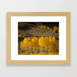 Colorado Gold Framed Art Print