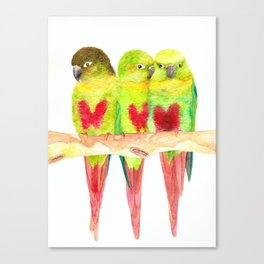 Green cheeked love Canvas Print