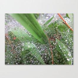 Wet Grass Canvas Print