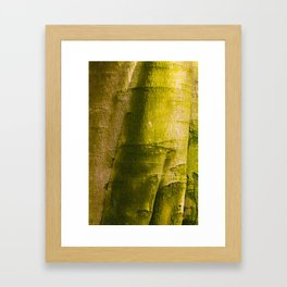 Beech I Framed Art Print