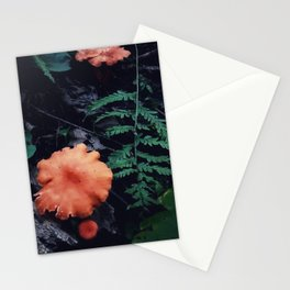 Mushroom Fern Woodland Forest Nature Photography Stationery Cards