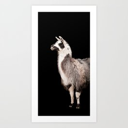 LAMA ( LLAMA) Art Print