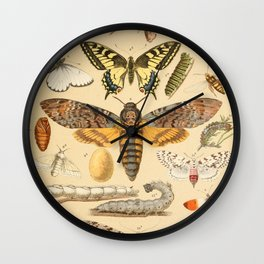 Popular History of Animals Butterfly Vintage Scientific Illustration Educational Diagrams Wall Clock