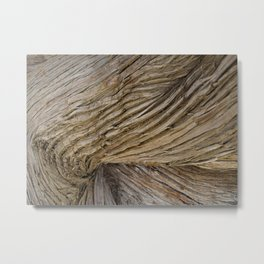Bark Funnel Metal Print