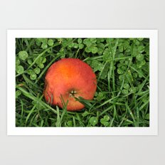 Fallen Apple Art Print