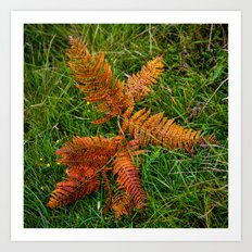 Dried Fern Art Print