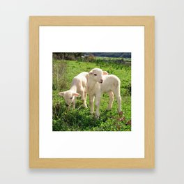 Spring Lambs Grazing On Farmland Framed Art Print
