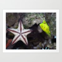 Starfish and Cowfish Photograph Art Print