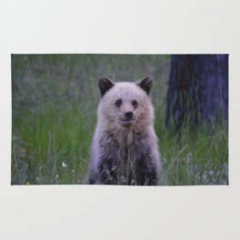 The most adorable grizzly bear cub in Jasper National Park   Canada Rug