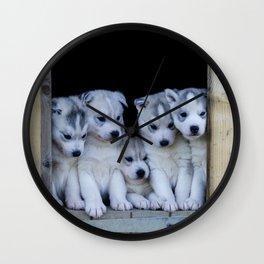 Husky puppies Wall Clock