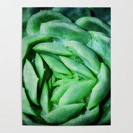 succulent cactus III Poster