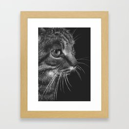 Tabby Cat (Scratchboard Art) Framed Art Print