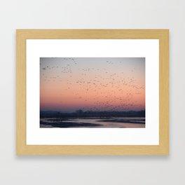 Sandhill Cranes at Sunrise on the Platte River Framed Art Print