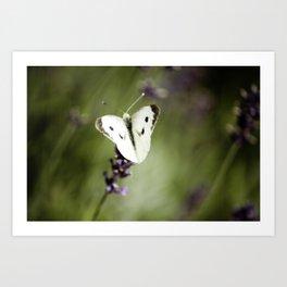 Butterfly Dream 1 Art Print