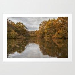 Autumn at Cannop 1 Art Print