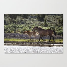 A Bay and Her Colt Running By The Waterhole Canvas Print