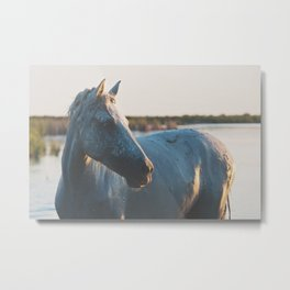a horse in portrait ... Metal Print