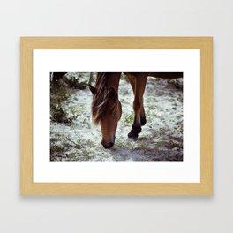 Grazing Pony Framed Art Print