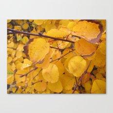 Preserved Sunshine Canvas Print