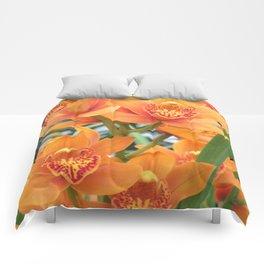 Orchid in Orange Comforters