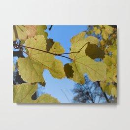 Wild Grape Leaf Metal Print
