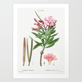 Oleander (Nerium oleander) from Traite des Arbres et Arbustes que lon cultive en France en pleine te Art Print