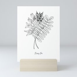 Inky Rosary Pea Mini Art Print
