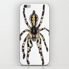 P. striata iPhone Skin