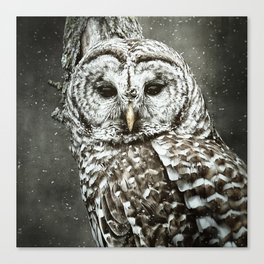 Night Owl Keepers curates BARRED OWL Throw Blanket by christinawilliamsphotography at Society 6