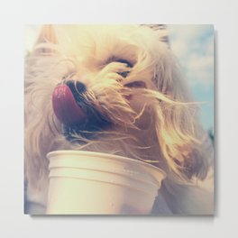 Ice cream dog Metal Print