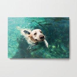 Dog swimming Metal Print