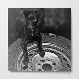 b/w dog Metal Print