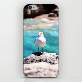 Grotto Seagull iPhone Skin