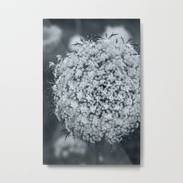Queen Anne's Lace Flower in Cool Monchrome Black and White Metal Print