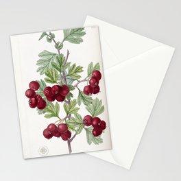 Flower 1852 crataegus orientalis Oriental Hawthorn19 Stationery Cards