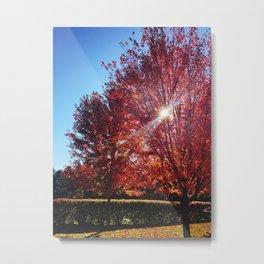 Red Leaves on Campus Three Metal Print